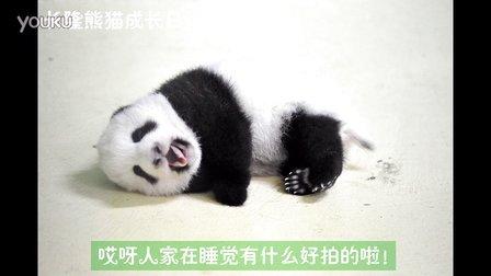 熊猫日记第85集