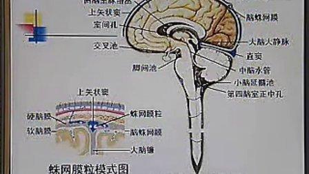 中国医科大学系统解剖学精品课程教学视频 50(免费)