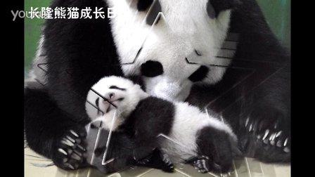 熊猫日记第87集