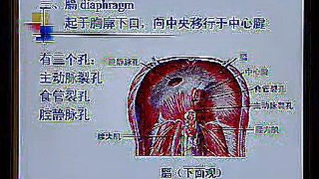 系统解剖学 09
