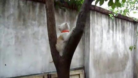 爬树的小猫咪