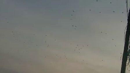 【拍客】霜降时节万只大雁飞过!