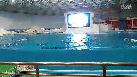表演 -海豚