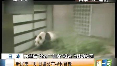 """日本:大熊猫""""比力""""""""仙女""""抵达上野动物园——新居第一天  日媒公布视频录像 [新一天]"""