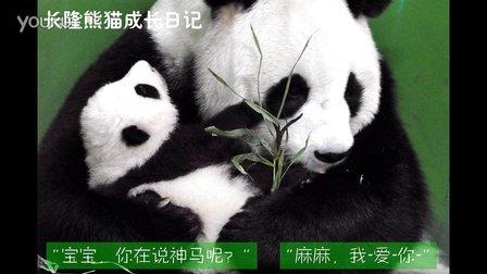 熊猫日记第90集