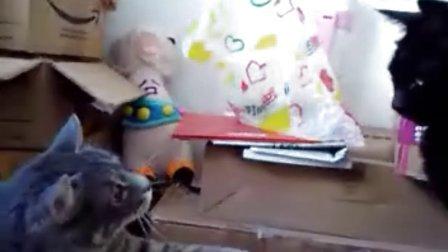 拖把日记:猫粮是用来吃的,小黑是用来欺负的。。。