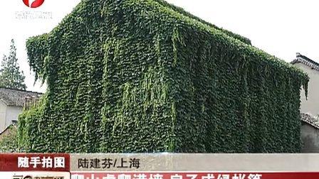 爬山虎爬满墙 房子成率帐篷 111226 每日新闻报