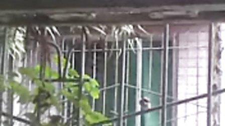 窗外的小鸟叽叽喳喳叫