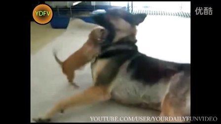 【冏囧】搞笑动物集锦