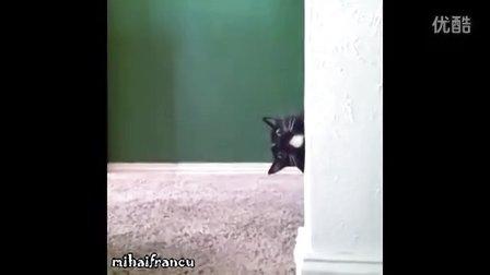 搞笑动物视频合集(1分54秒)