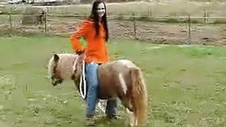 Great Pony Riding