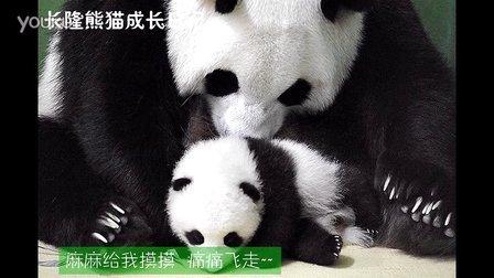 熊猫日记第92集
