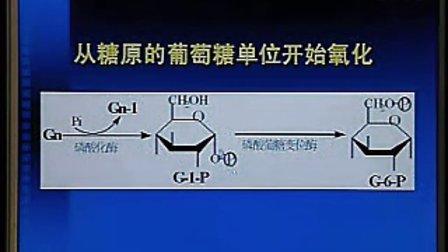 中国医科大学生物化学与分子生物学14