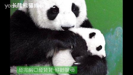 熊猫日记第93集