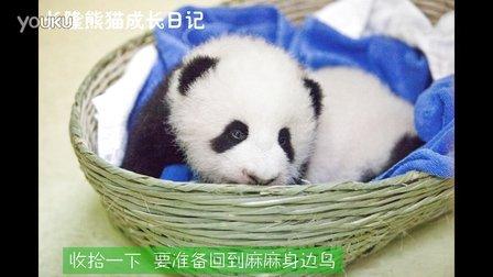 熊猫日记第94集
