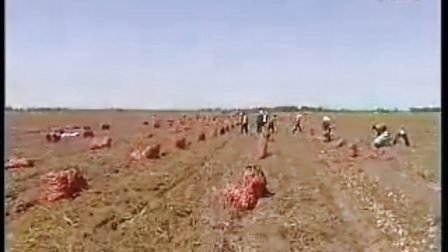 视频——2010年9月15日内蒙赤峰市元宝山区元宝山镇高产马铃薯种植技术现场会
