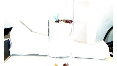ELMO 艾路摩展台的精彩视频: 跳舞的葡萄干实验
