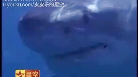 大白鲨3 星空卫视 中文字幕