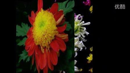 鲜花献给长歌