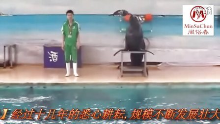 【闽俗春】厦门鼓浪屿海狮表演(minsuchun.taobao.com)