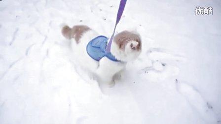 波斯猫经历第一次下雪