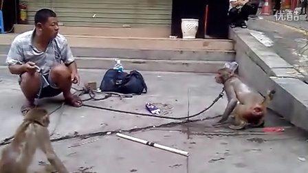 深圳观澜富士康大水坑一村旁耍猴