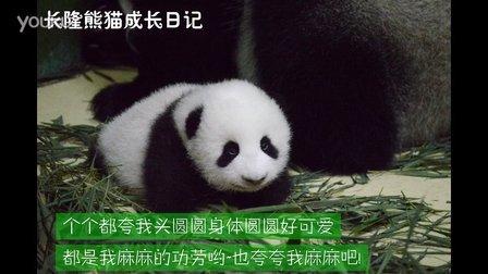 熊猫日记第95集