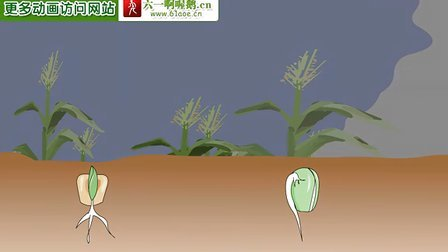 种子发芽-动画片
