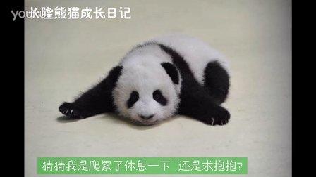熊猫日记第96集