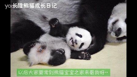熊猫日记第98集