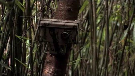 94.丛林之眼