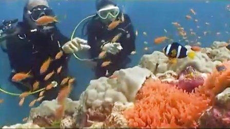 令人向往的神奇的泰国海底世界