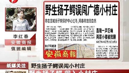 野生扬子鳄 闯入小村庄 111213 每日新闻报
