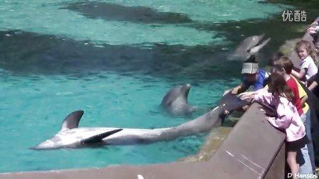 美国海洋世界偶遇海豚 Encountering Dolphins At SeaWorld USA