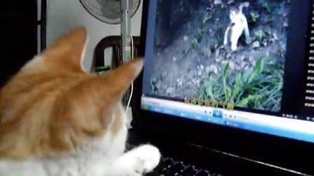 看视频的猫咪