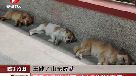 随手拍图 三只小狗排排睡 什么叫训练有素 111212 每日新闻报