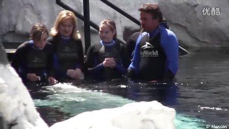 美国加州海洋世界之鲸鱼,北极熊,海象 SeaWorld USA