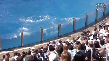 海豚表演(美国海洋世界)Dolphin Show At SeaWorld USA