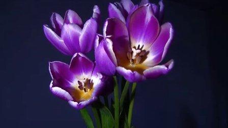 ELMO 艾路摩展台的精彩视频: 开花的瞬间