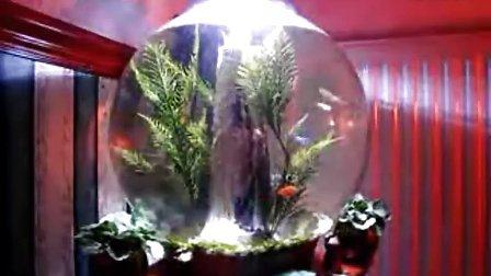 105L BiOrb生态自洁鱼缸造景展示(二)