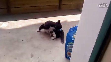 虐猫视频,惨不忍睹