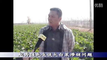 固安村民40亩大白菜田中滞销