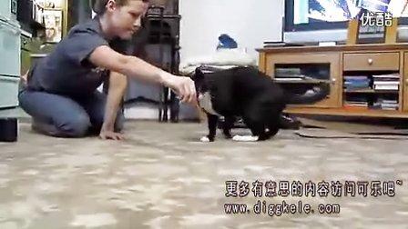 不可思议猫咪会翻跟头 QQ情侣头像www.qianminger.com