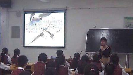 第一届骨干教师课堂教学大赛    语文  老人与海鸥   黄婷婷