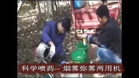 周至兴群猕猴桃专业合作社-http:mht.888nyw.com