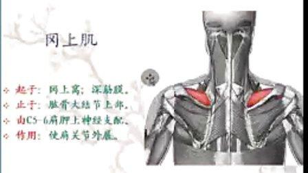 医林漫步老师2011.10.3讲的运动肩关节的肌肉