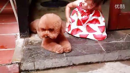 训练金毛犬警戒www.jmakc.com北京金毛犬舍