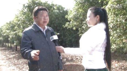 桂花﹒庭园经济 给咸宁人民带来希望