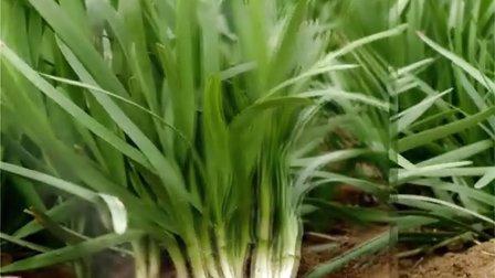 河南省平顶山市园艺科学研究所韭菜种子育种网络专题