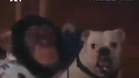 狗狗猩猩大冒险搞笑视频第一季  第七集